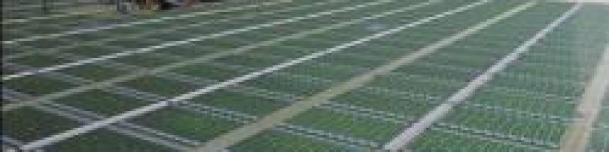 Biocombustibles: La solución no está en las algas.
