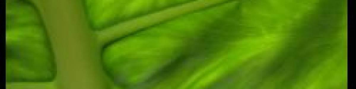 BIOTERRA 07 primera feria neutra en C02 de Europa de la mano de Ekopass