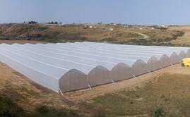 Invernadero Sudafrica ULMA Agricola