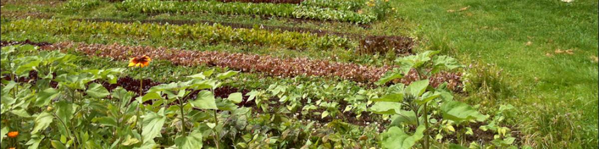 Agricultura ecológica, cooperativa y viable
