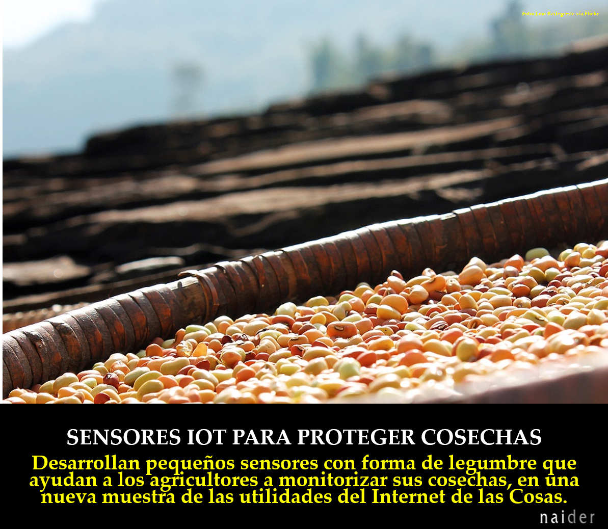 IOT para proteger cosechas infopost.jpg