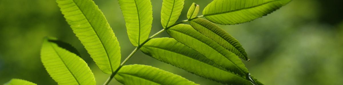 Es posible crecer y reducir las emisiones de CO2
