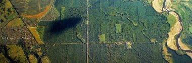 El aceite de palma y la salud del planeta
