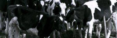 El precio justo de la leche