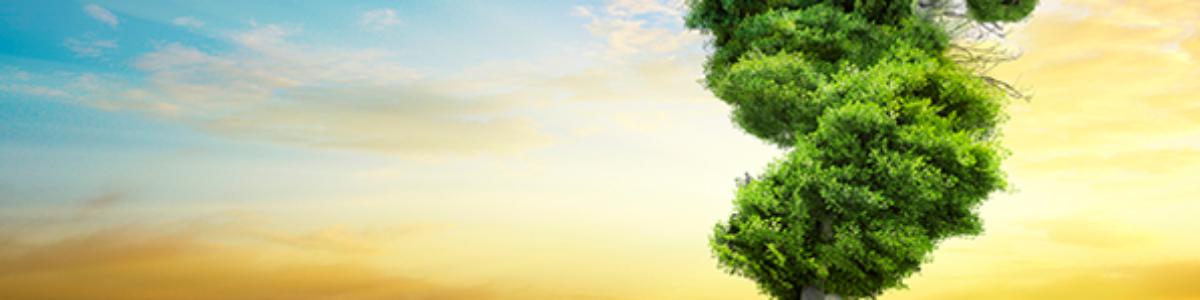 Elaboración de la Huella Ecológica de Euskadi 2019