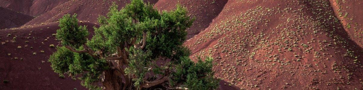 La conservación del suelo y el cambio climático