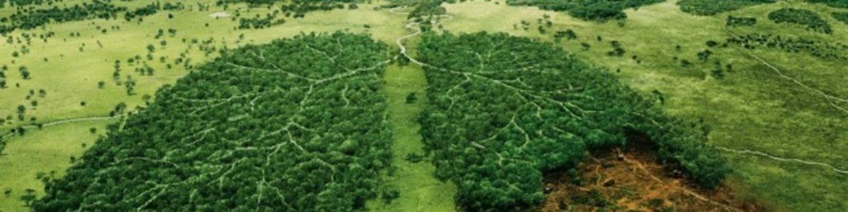 La Gran Muralla Verde