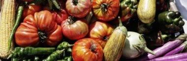 Donostia Urban Lur: Agricultura en la ciudad,